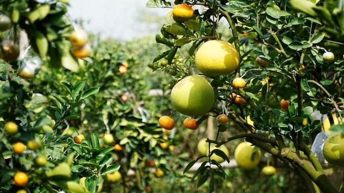 - Top 09 Loại Trái Cây Nên Ăn Vào Mùa Hè