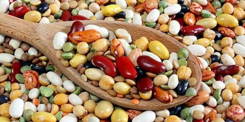 Top 5 Nguồn Bổ Sung Protein Tốt Giá Rẻ Cho Gymer -  - Cá ngừ | Các loại đậu | Sữa tươi 17
