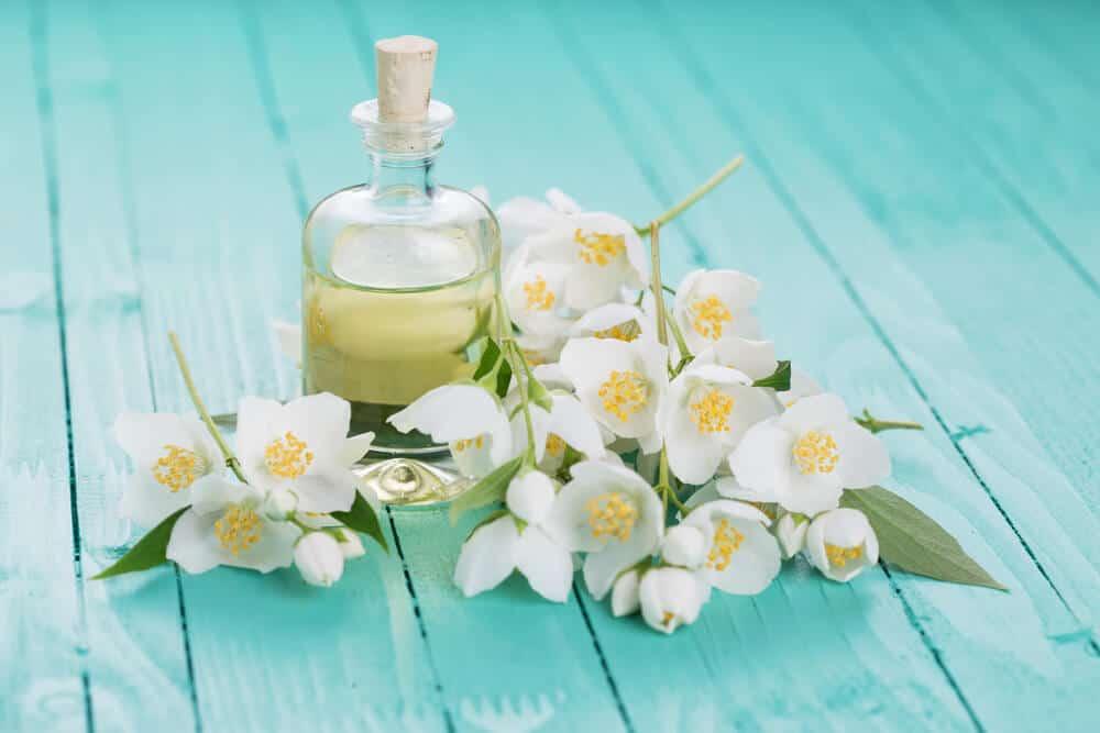 Top 5 Loại Tinh Dầu Thực Vật Chăm Sóc Tốt Cho Sức Khỏe -  - Tinh Dầu Dừa | Tinh Dầu Hoa Nhài | Tinh Dầu Lavender 19