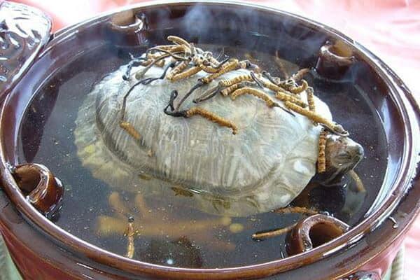 Top 05 Món Ăn Ngon Được Chế Biến Từ Đông Trùng Hạ Thảo -  - Ba ba hầm đông trùng hạ thảo | Bồ câu hầm đông trùng hạ thảo | Canh chân gà đông trùng hạ thảo 17