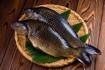 Giá Trị Dinh Dưỡng Và Những Công Thức Chế Biến Món Ngon Từ Cá Diếc Đồng - Trong Bữa Ăn Thuần Việt 100