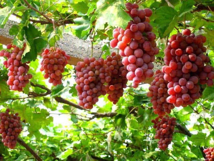 - Top 10 Loại Trái Cây Tốt Cho Sức Khỏe Giàu Vitamin Khoáng Chất