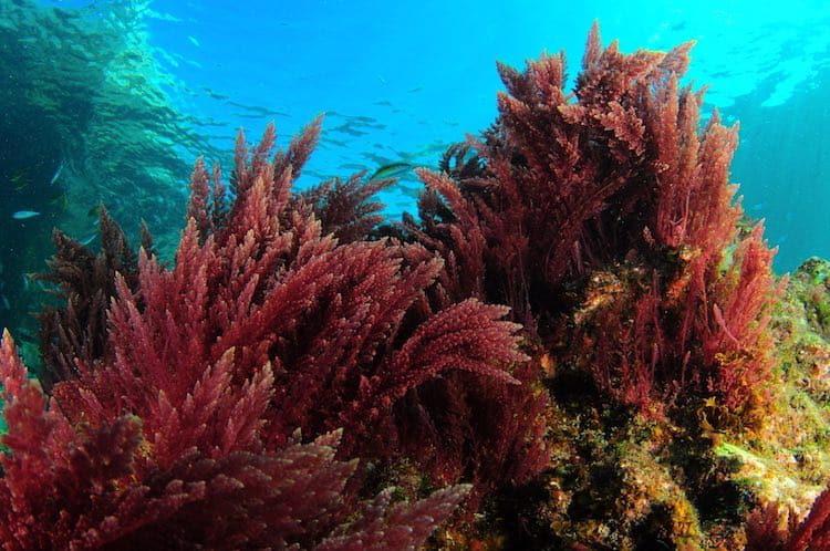 Top 8 Thực Phẩm Giàu Canxi Tốt Cho Sức Khỏe Xương Của Người Cao Tuổi - thực phẩm giàu canxi - Bông cải xanh | Cá biển | Cua đồng 33