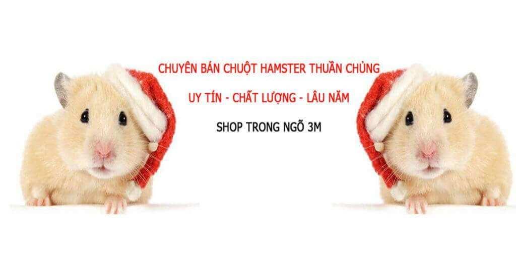 Top 10 Cửa Hàng Thú Cưng Được Lựa Chọn Nhất Hà Nội -  - Hà Nội   Hamster Shop Luna   Ilu Pet Shop 26