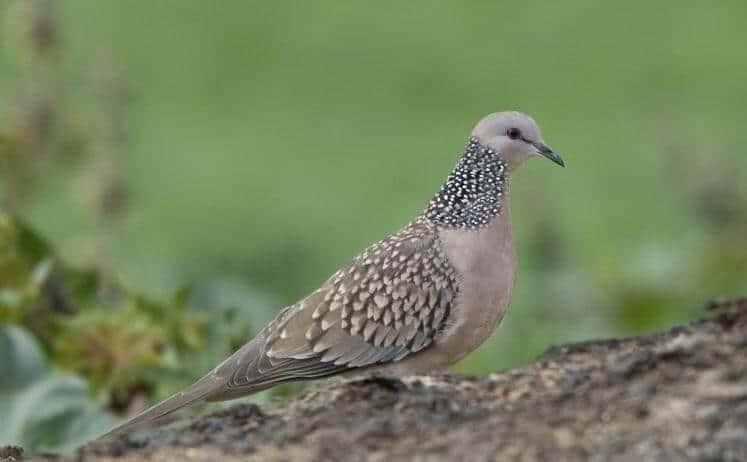Top 10 Giống Chim Được Nhiều Người Thích Nuôi Nhất -  - chim cảnh 31