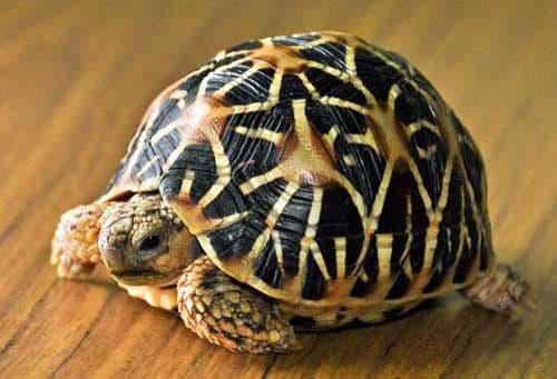Top 10 Loài Thú Cưng Được Nuôi Nhiều Nhất -  - Thú cưng 121