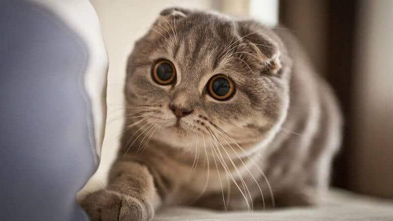 - Top 10 Giống Mèo Được Nuôi Nhiều Nhất Hiện Nay
