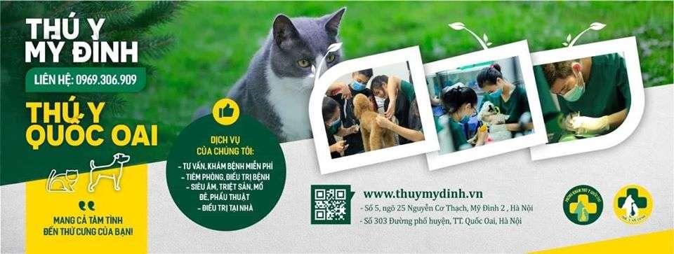 Top 10 Phòng Khám Bác Sĩ Thú Y Tốt Nhất Hà Nội -  - Animal Care | Bệnh viện thú cảnh Greenpet | Bệnh viện thú y Hải Đăng 25